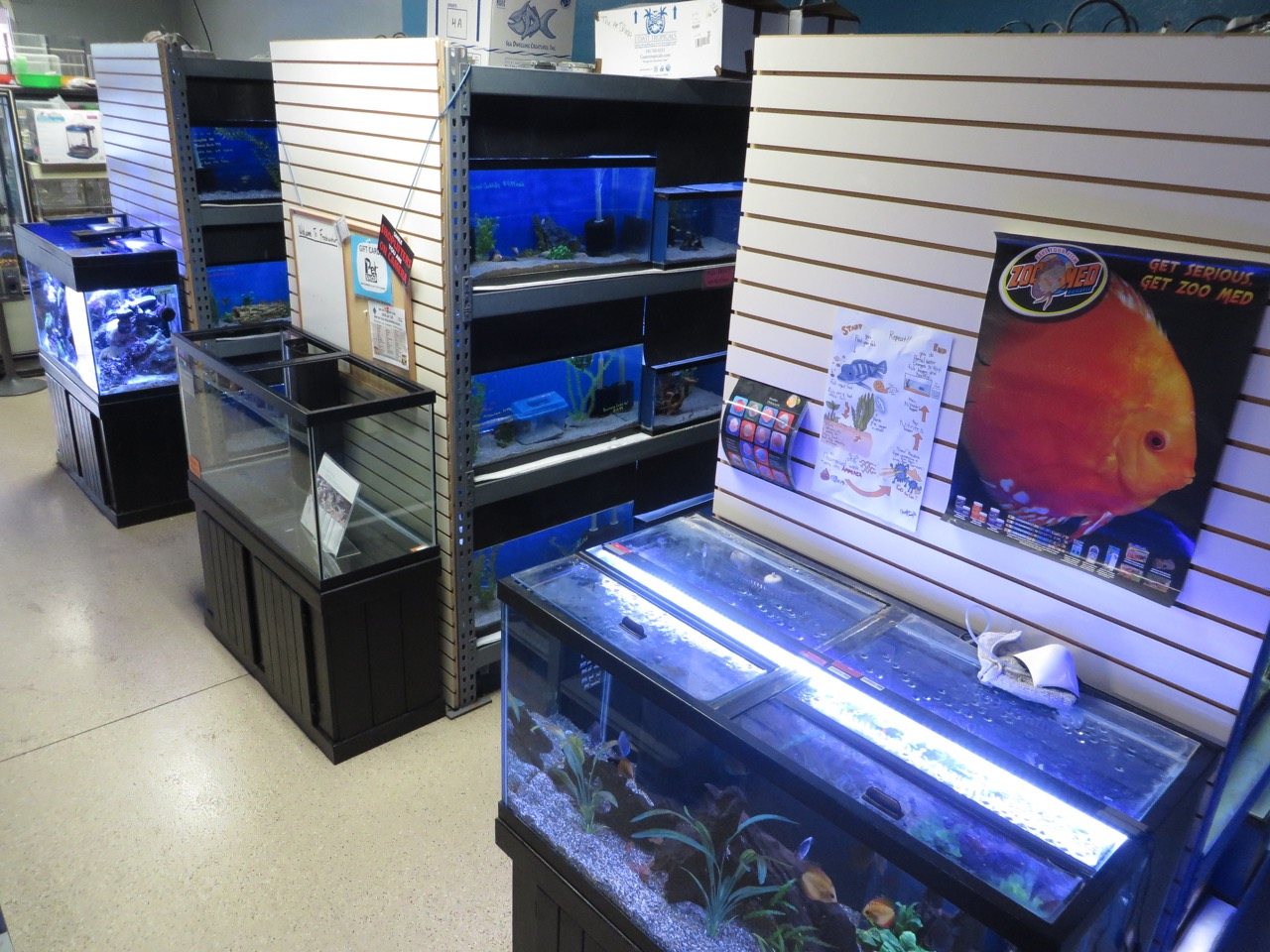 Display reef and discus tank