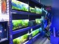 Freshwater Plants